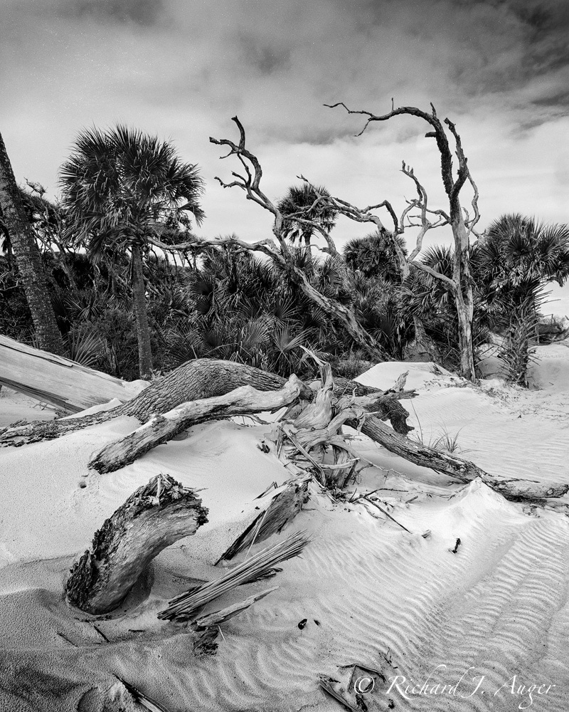 Amelia Island State Park, Florida, Sand, black and white, photograph, driftwood, nature