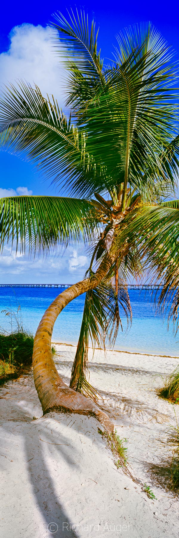 Bahia Honda State Park, Florida Keys, Palm Tree, Sunny, Vertical Panorama, Beach, Tropical, Photography