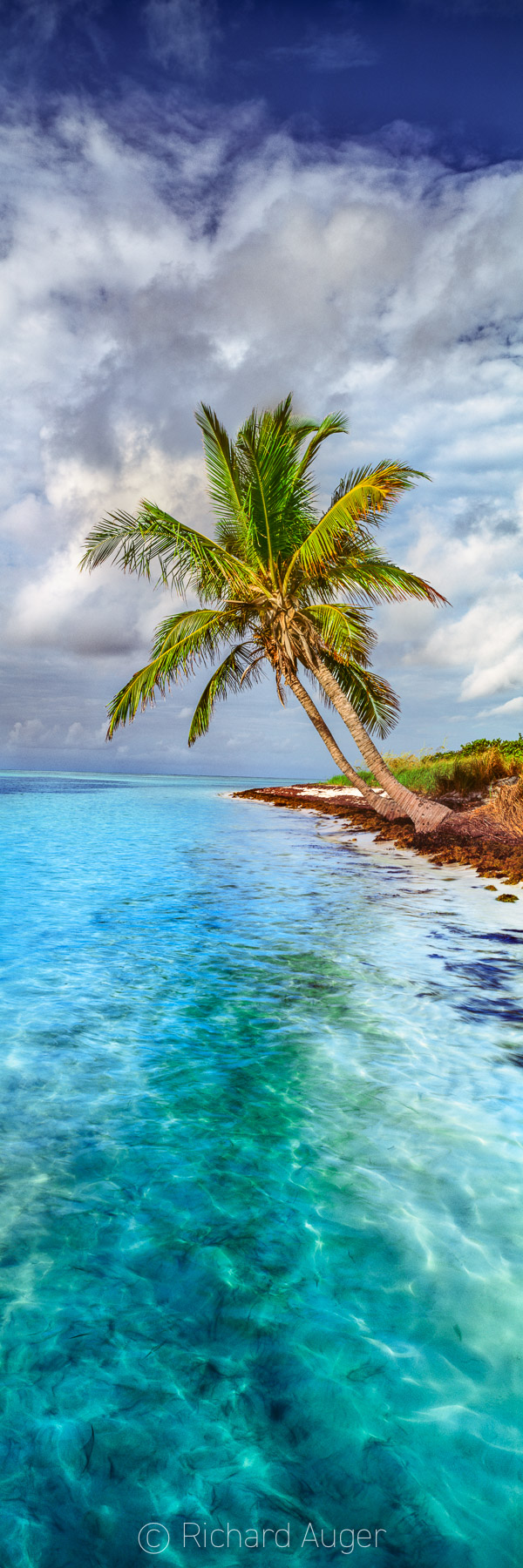 Bahia Honda State Park, Florida Keys, Palm Trees, Morning, Vertical Panorama, Fluorescent Water
