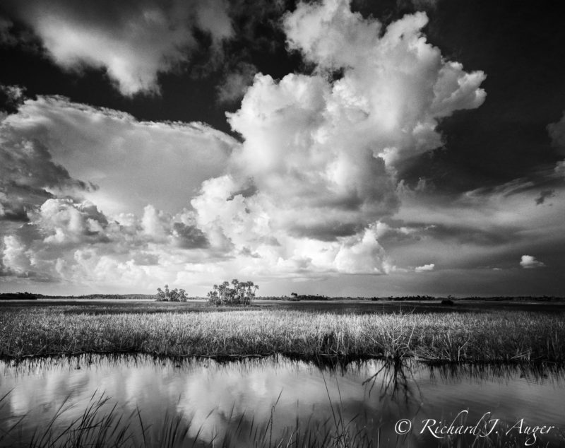 Big Cypress National Preserve, Florida, Everglades, Black and White, Sky, Swamp, water, nature, photograph