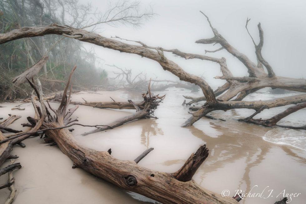 Big Talbot Island, Florida, Beach, Fog, Driftwood