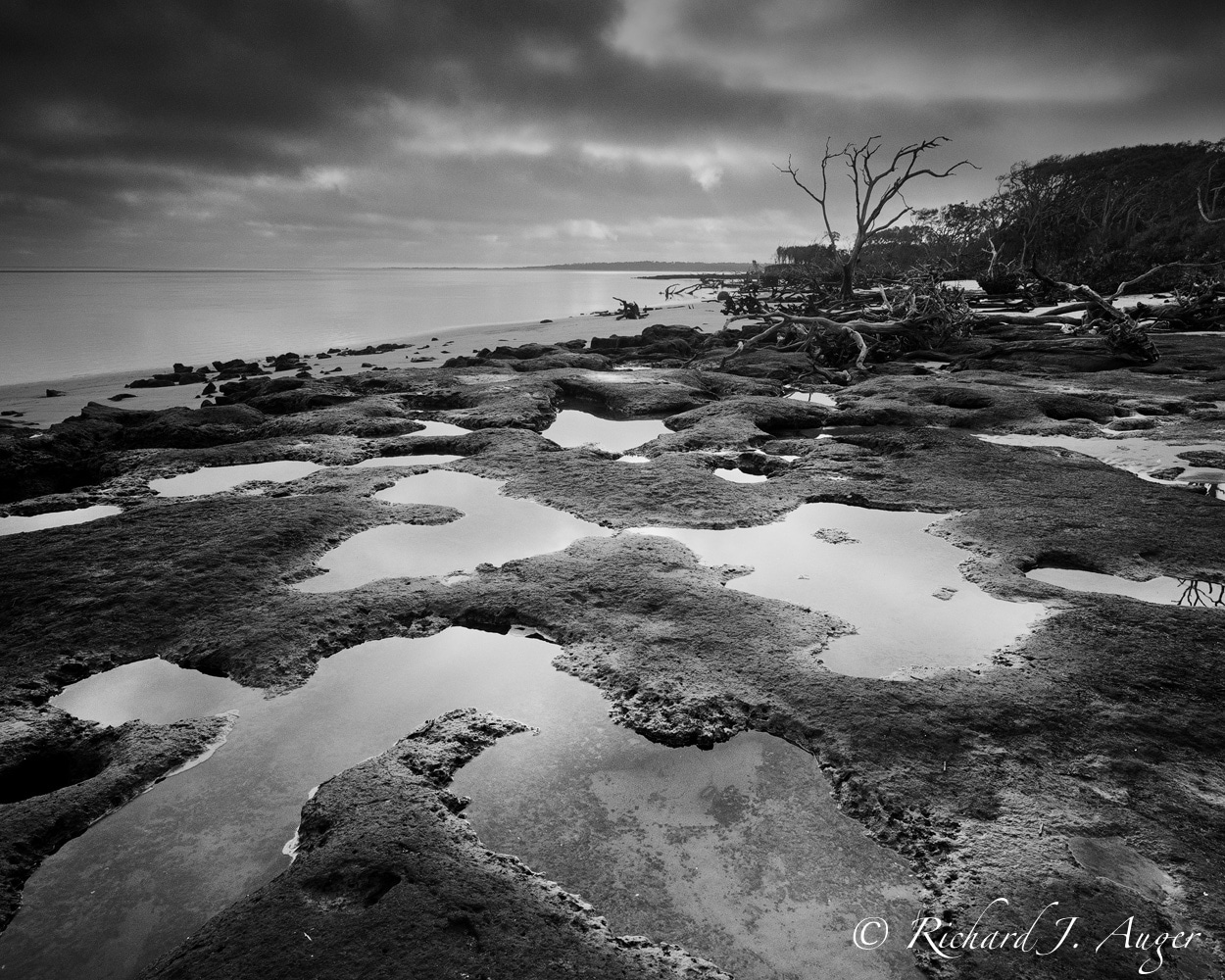 Bit Talbot Island State Park, Nassau County, Florida, Black Rock, Anastasia Limestone, Reflection Pools, Black and White, Driftwood, Beach, Ocean