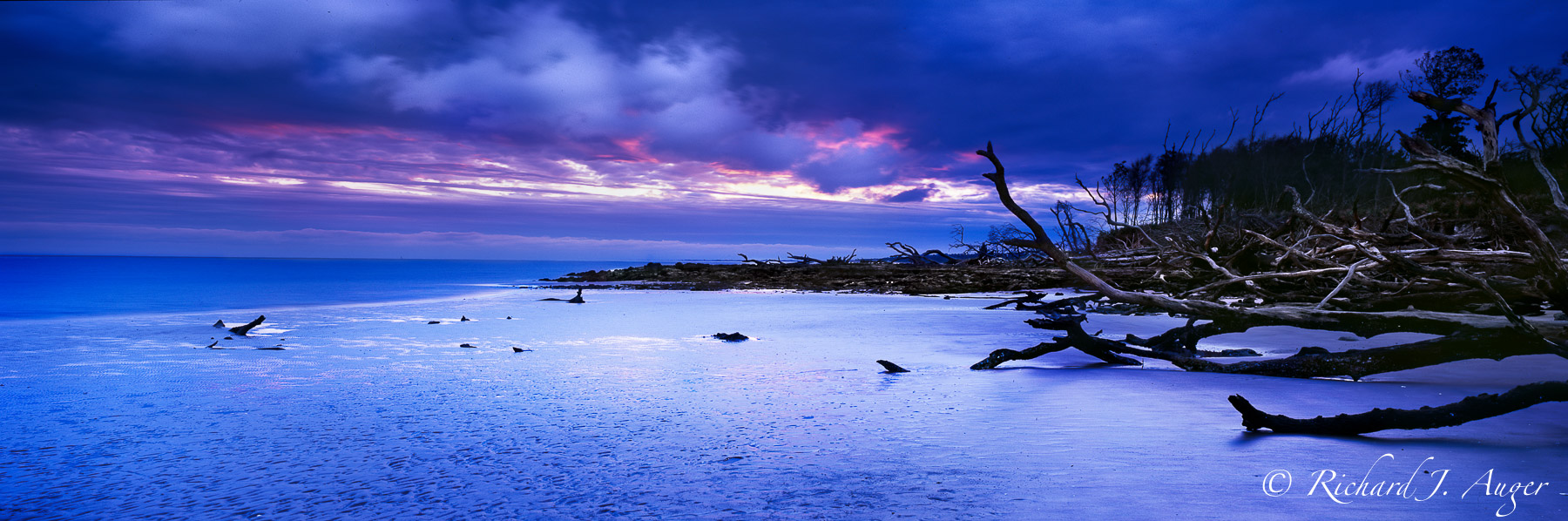 Big Talbot Island State Park, Florida, Driftwood, Landscape, Photograph, Panorama, Beach