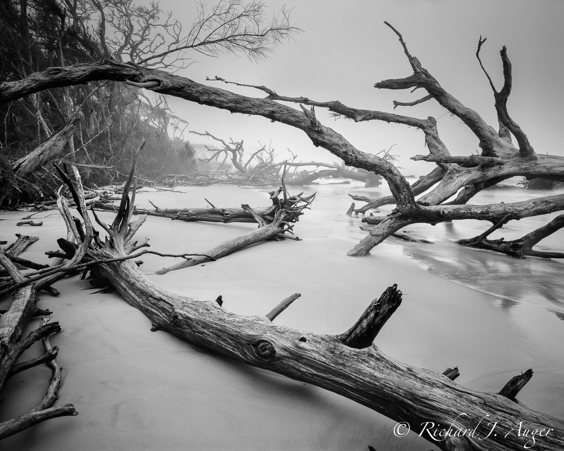Big Talbot Island State Park, Florida, Driftwood, Black and White, Monochrome, Landscape, Photograph, Beach, Ocean, Fog