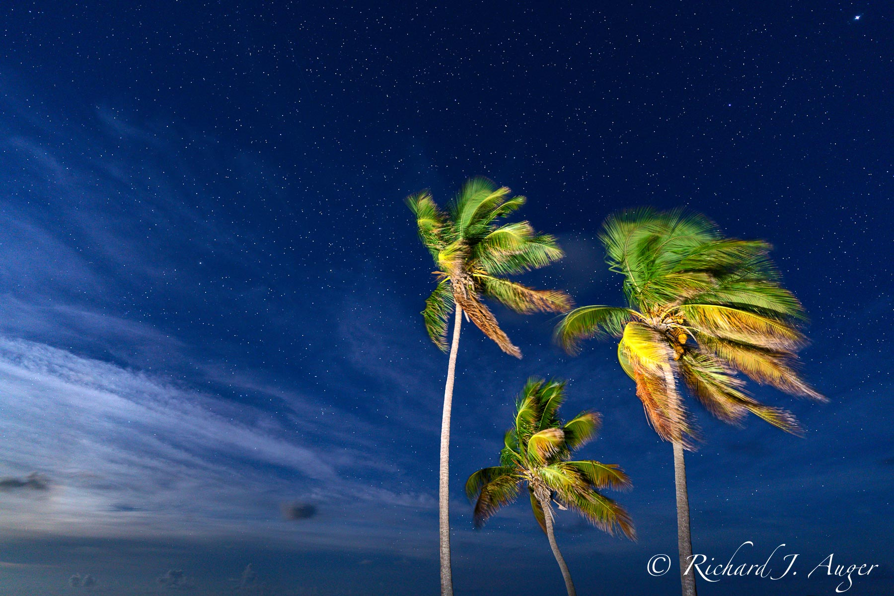 Florida Keys, Palm Trees, Bahia Honda, Key West, Midnight, Stars, Lighting, Blue