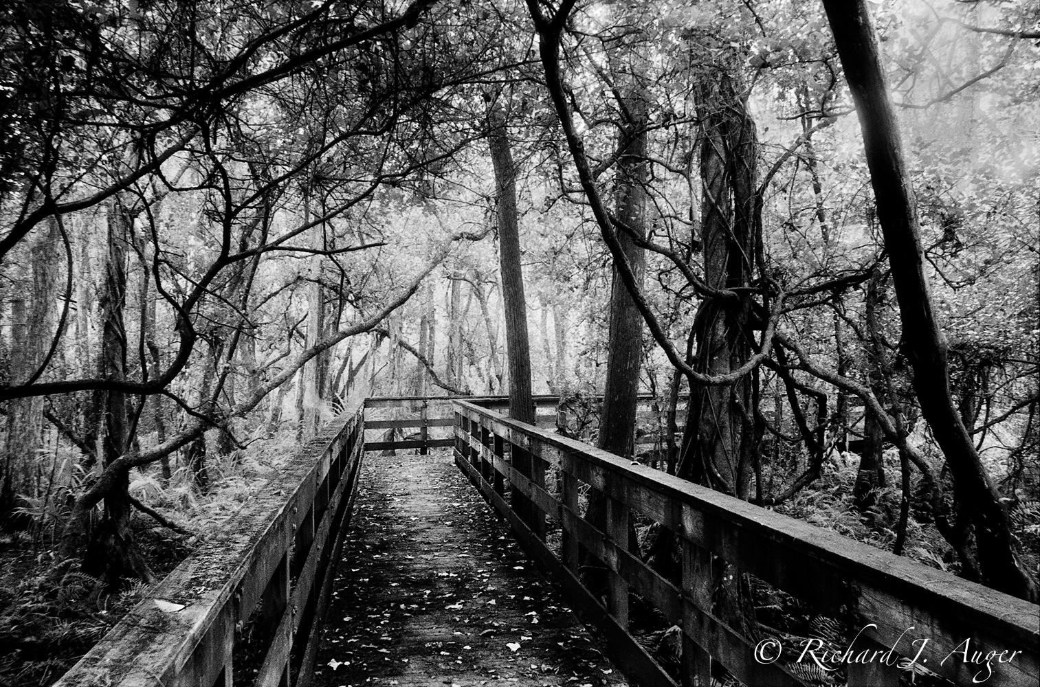 Everglades, Florida, Swamp, Boardwalk, Black and White, Celestia Series