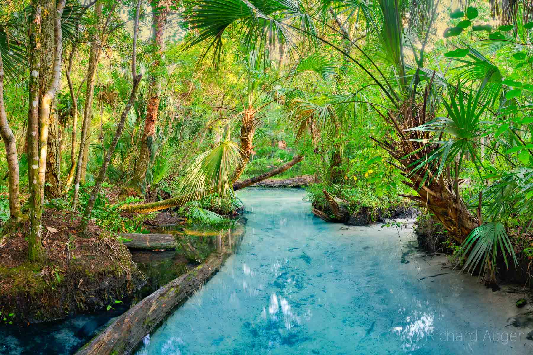 Chassahowitzka River, Baird Creek, Florida, Spring, kayaking, palm trees, nature, photograph, photo, photographer, landscape