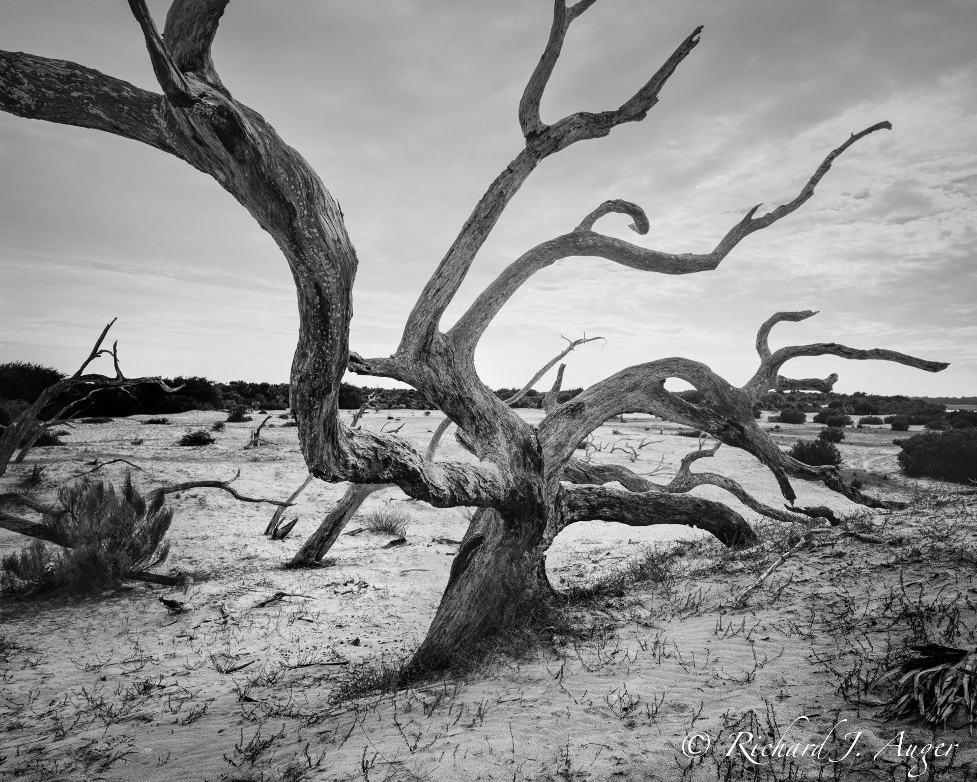 Cumerbland Island, Georgia, Driftwood, Black and White, Nature, Photographer