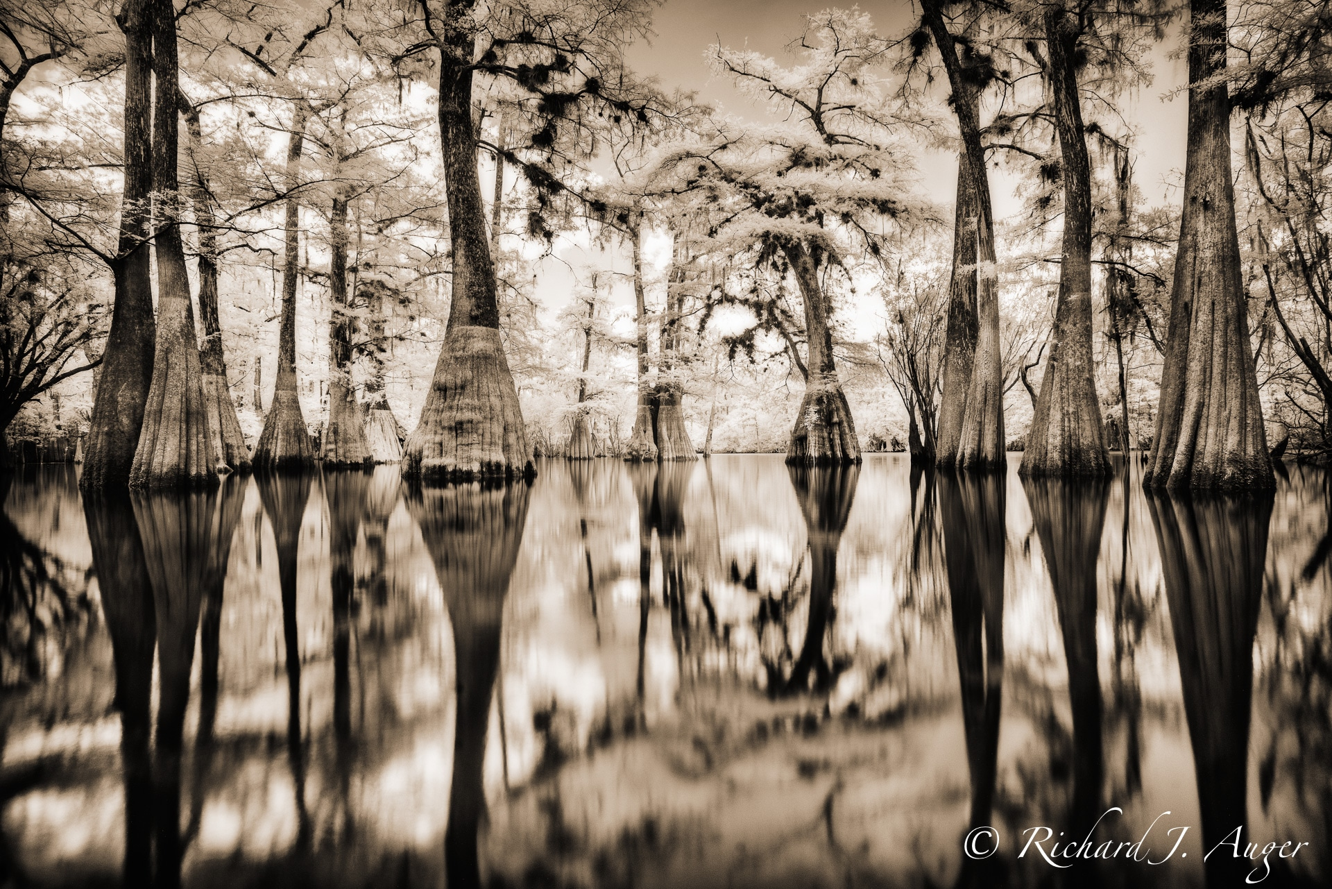 Suwannee River, Florida, Cypress, Swamp, Reflections, Tall, Landscape, water, photograph, sepia tone, black and white