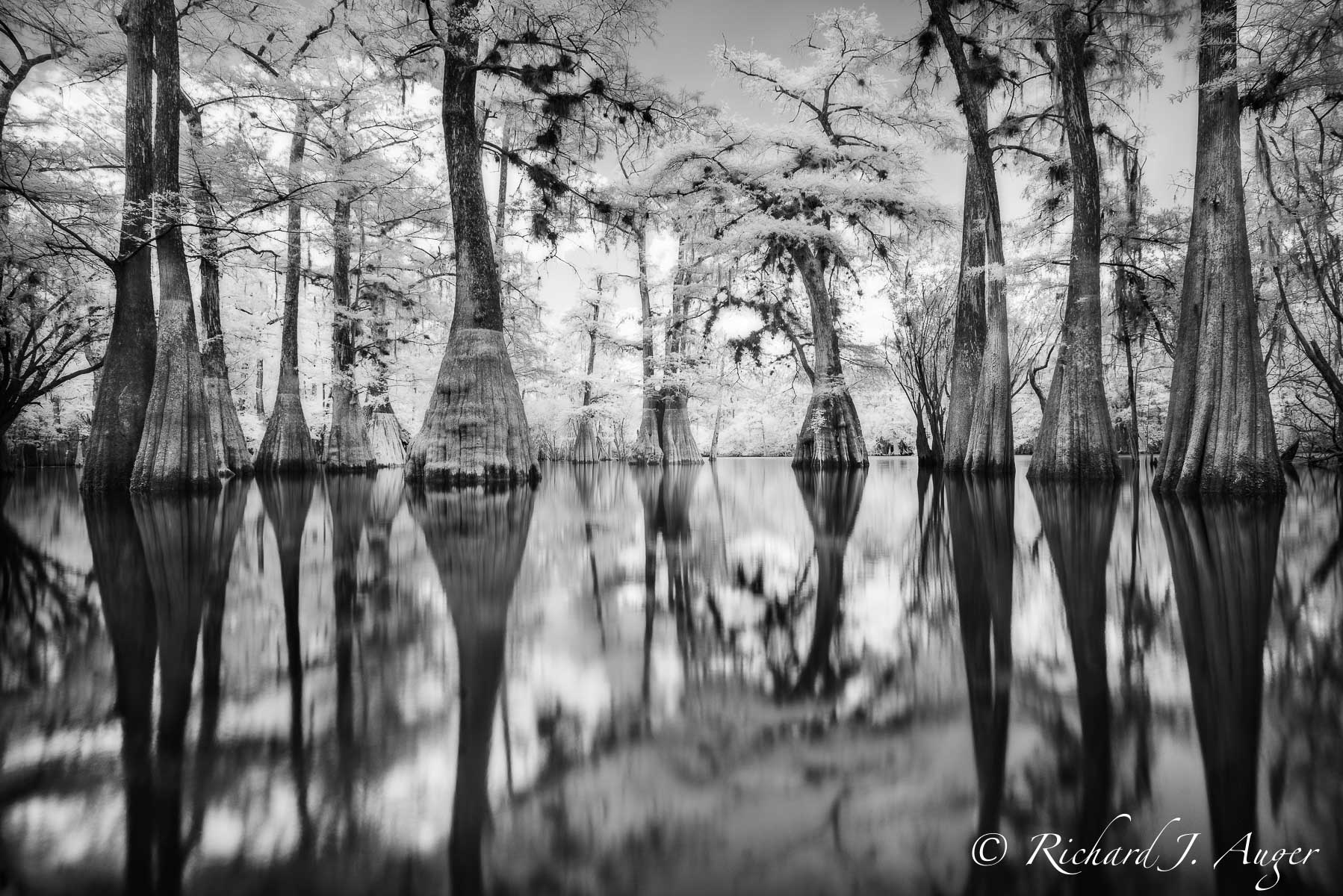 Suwannee River, Florida, Cypress, Swamp, Reflections, nature, water, photographer, black and white