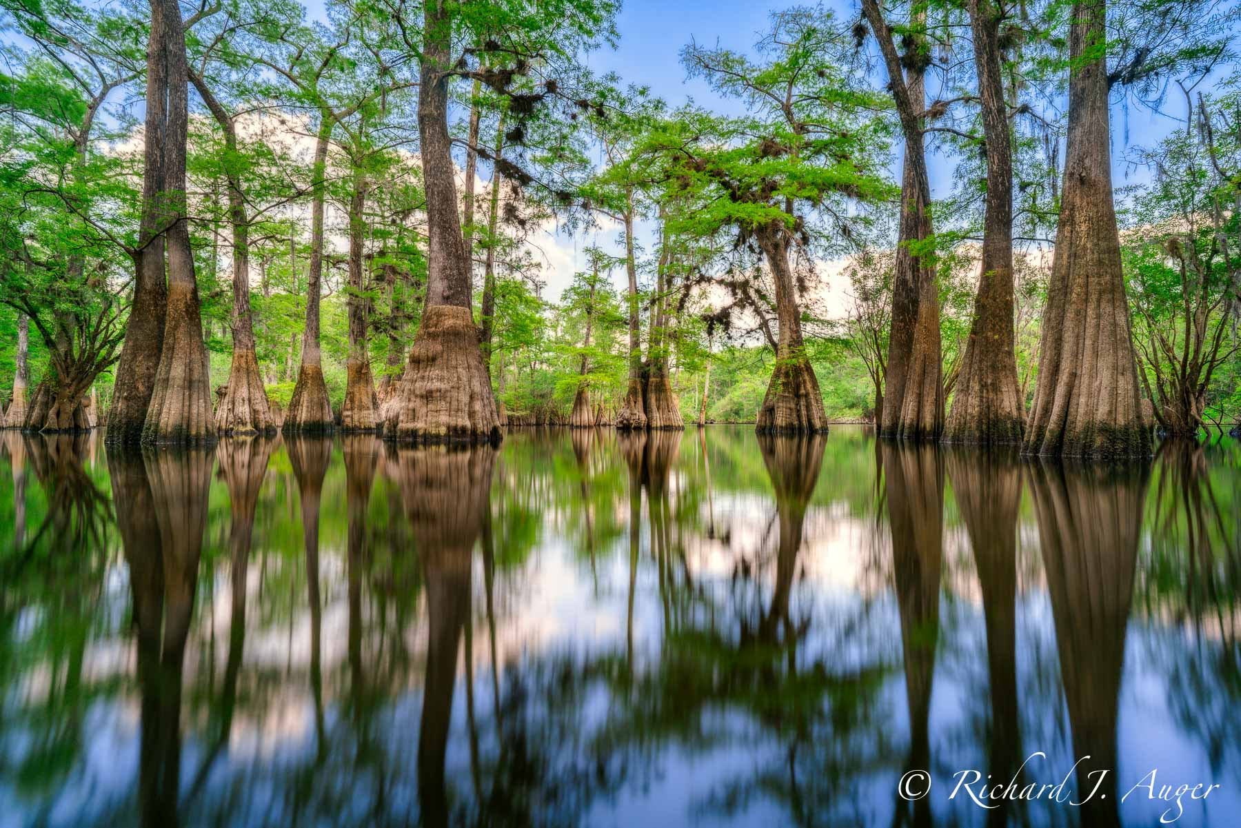 Suwannee River, Florida, Panhandle, Cypress, Reflections, Water