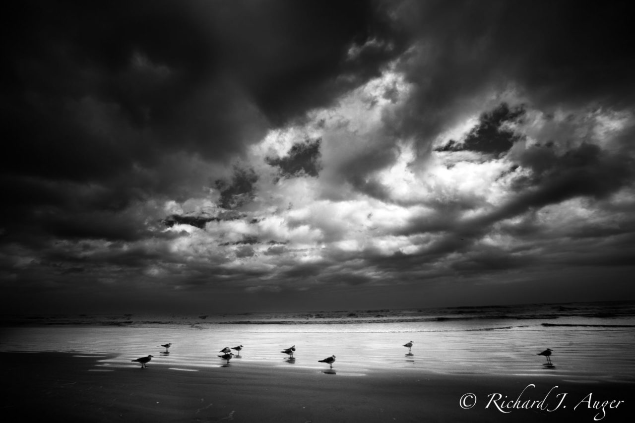 Daytona Beach, Florida, Birds, Black and White, Storm