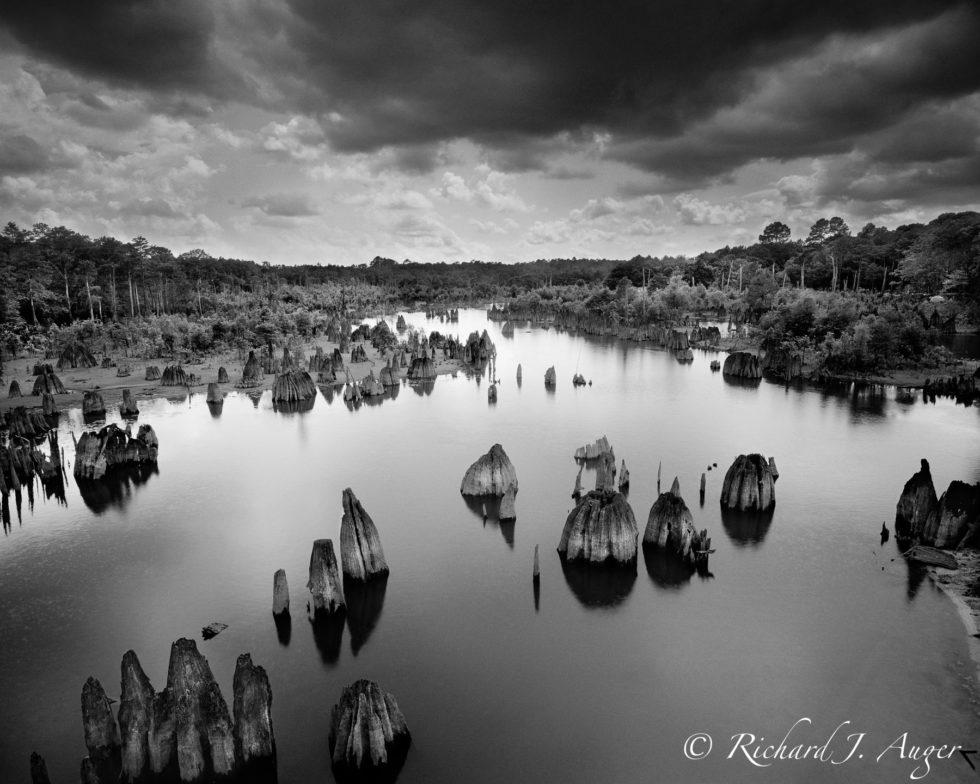 Dead Lakes, Florida, Photography, Black and White, Cypress, Storm, Reflections
