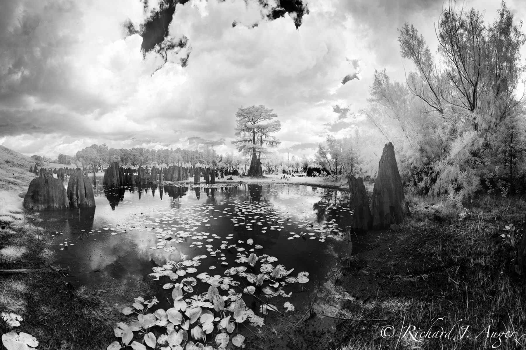 Dead Lakes, Florida, Wewahitchka, Cypress, Storm, Infrared, Black and White