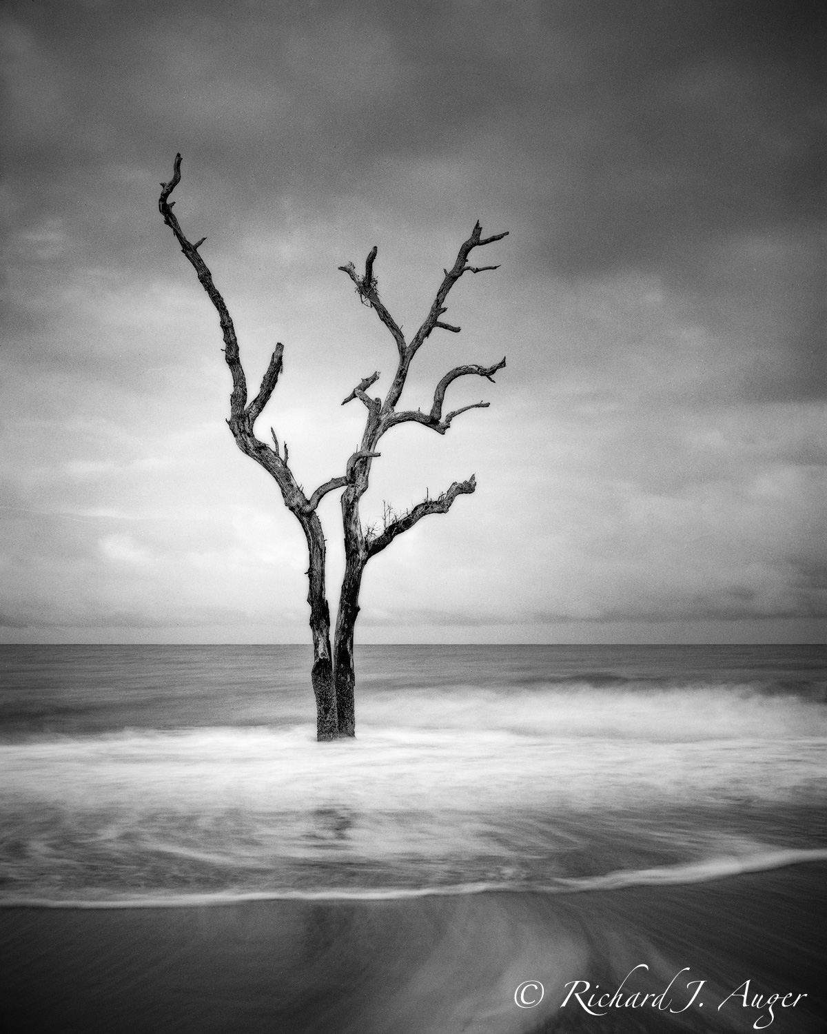 Edisto Island, Botany Bay, South Carolina, Driftwood, Long Exposure