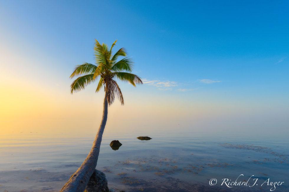 Islamorada, Florida Keys, Sunrise, Palm Tree, Ocean, Caribbean, Tropical, Abstract