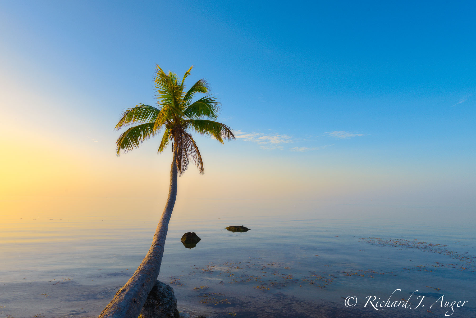 Islamorada, Florida Keys, Sunrise, Palm Tree, Ocean