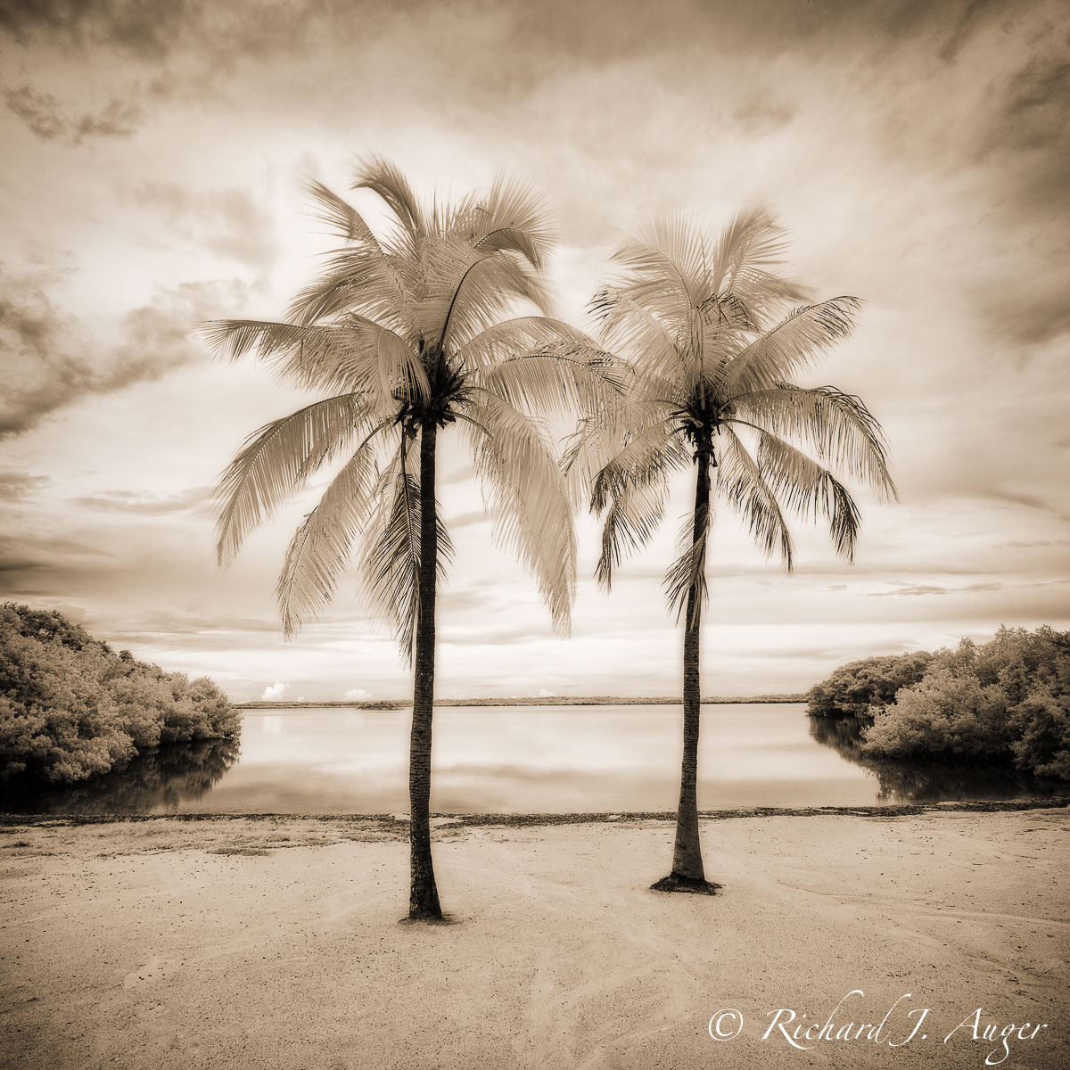 Florida Keys, Palm Trees, Water, Mangroves, Calm, Peaceful, infrared, landscape, photographer, art, sepia tone, black and white