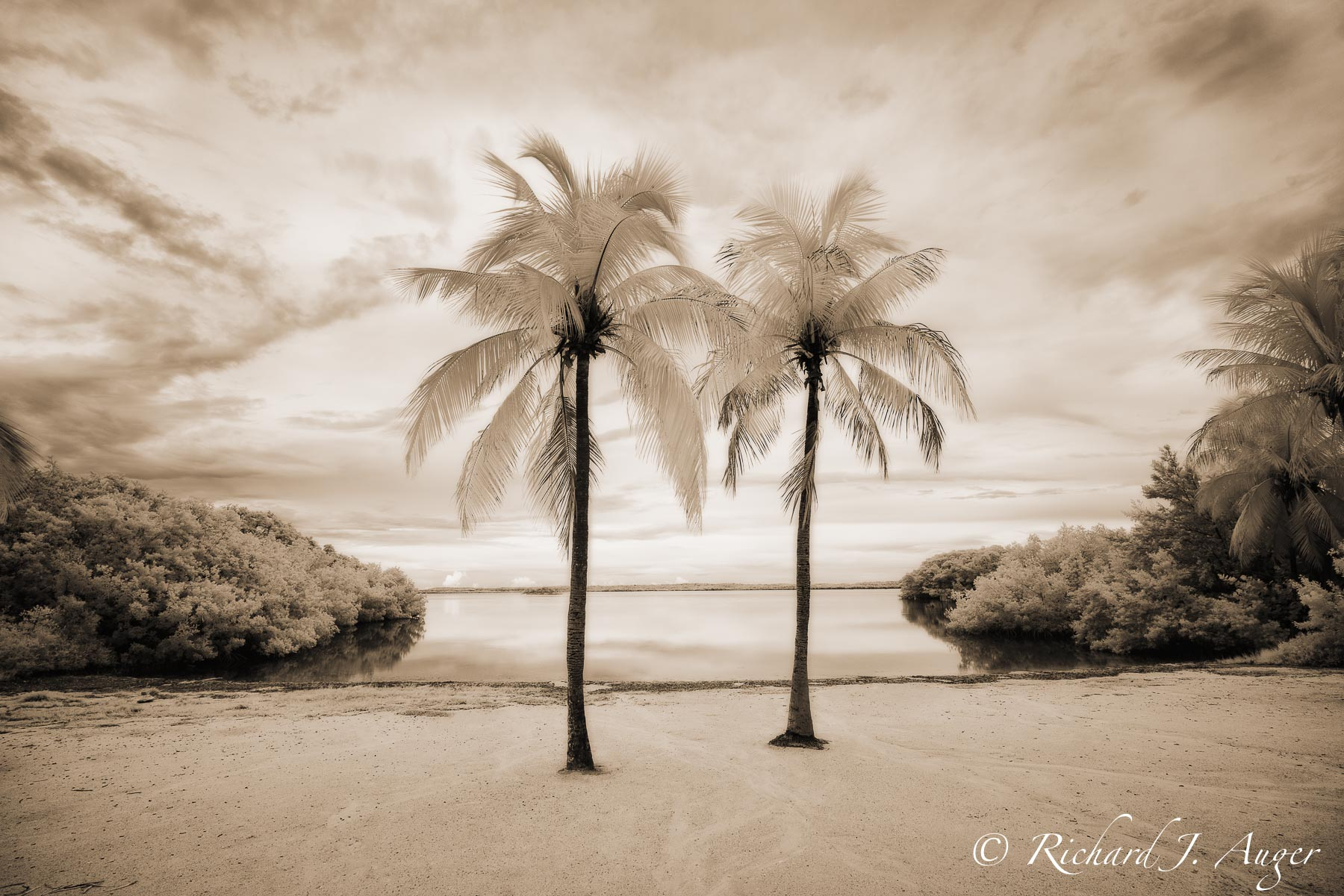 Florida Keys, Palm Trees, Water, Mangroves, Calm, Peaceful, infrared, landscape, photographer, art