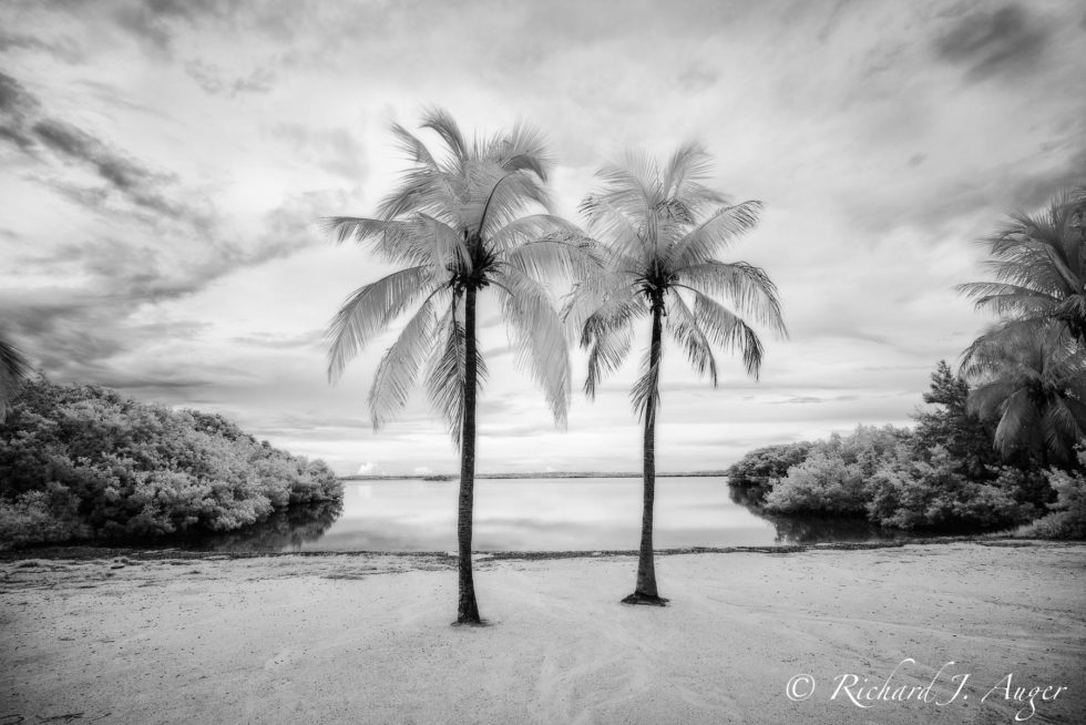 John Pennekamp Coral Reef State Park, Florida Keys, Black and White, Photograph, Palm Trees, Beach, Water, Landscape
