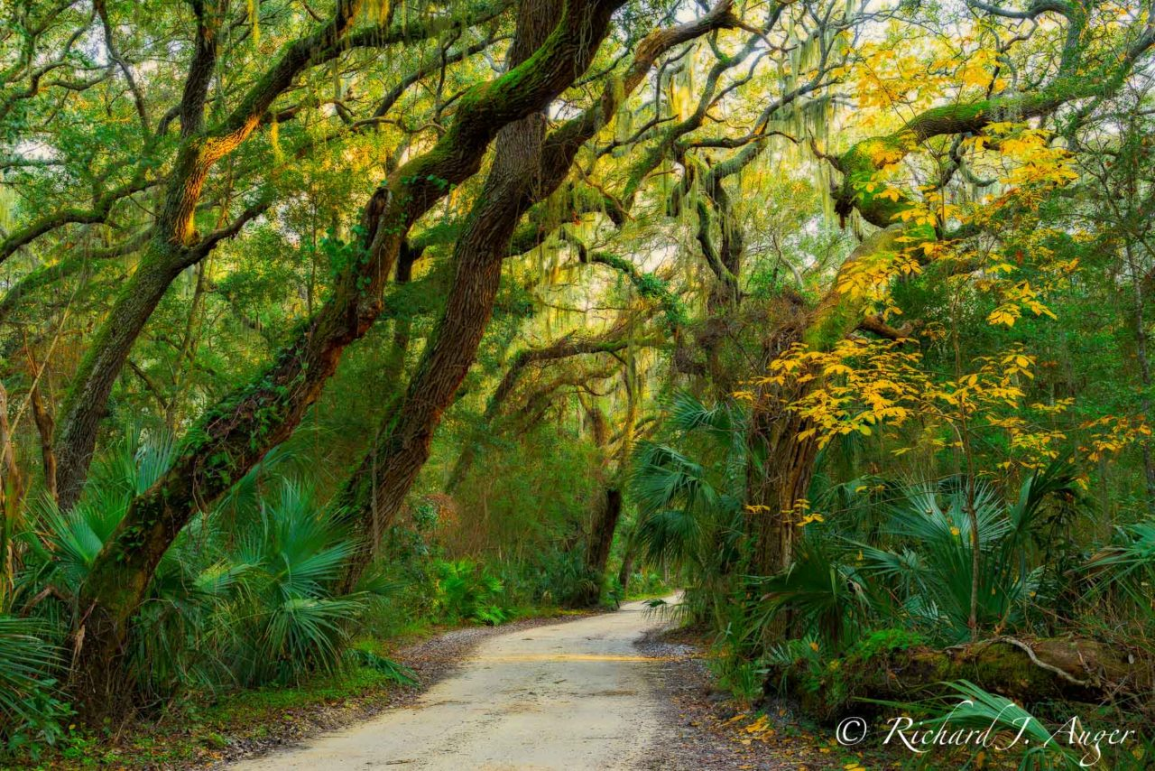 Fort George Island State Park, Florida, Amelia Island, Duval County, Forest, Sunset, Warmth, Oak Trees, Trail