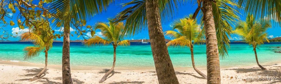 Virgin Islands, US, Salomon Beach, St John Island, Palm Trees, Paradise, Photograph, Photographer, Landscape, Canvas Wrap, Metal Print