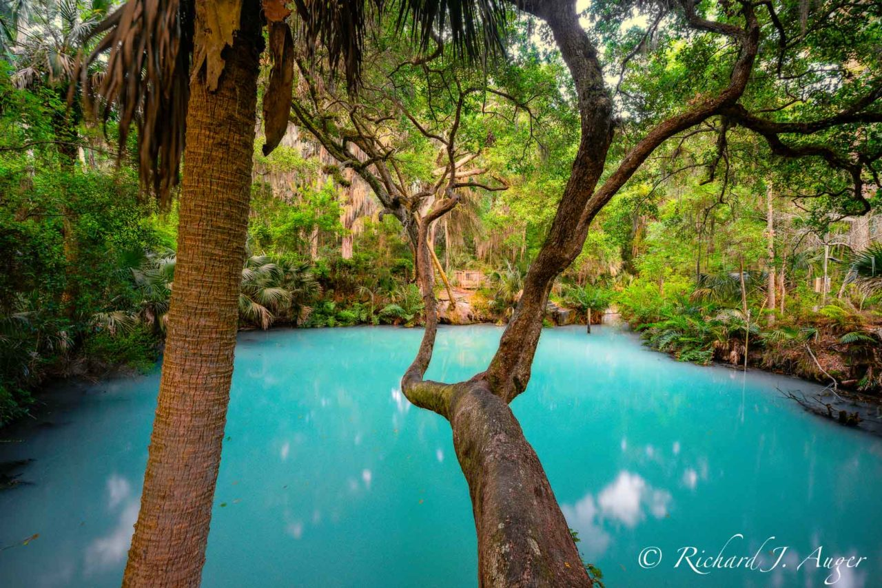 Green Springs, Deland, Volusia County, Florida, blues, forest, tropical, nature