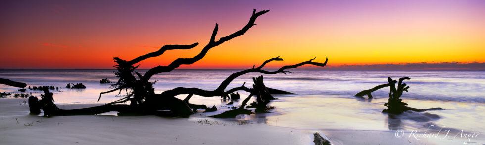 hunting island, South Carolina, driftwood, winter, orange, photography, silhouette, photograph