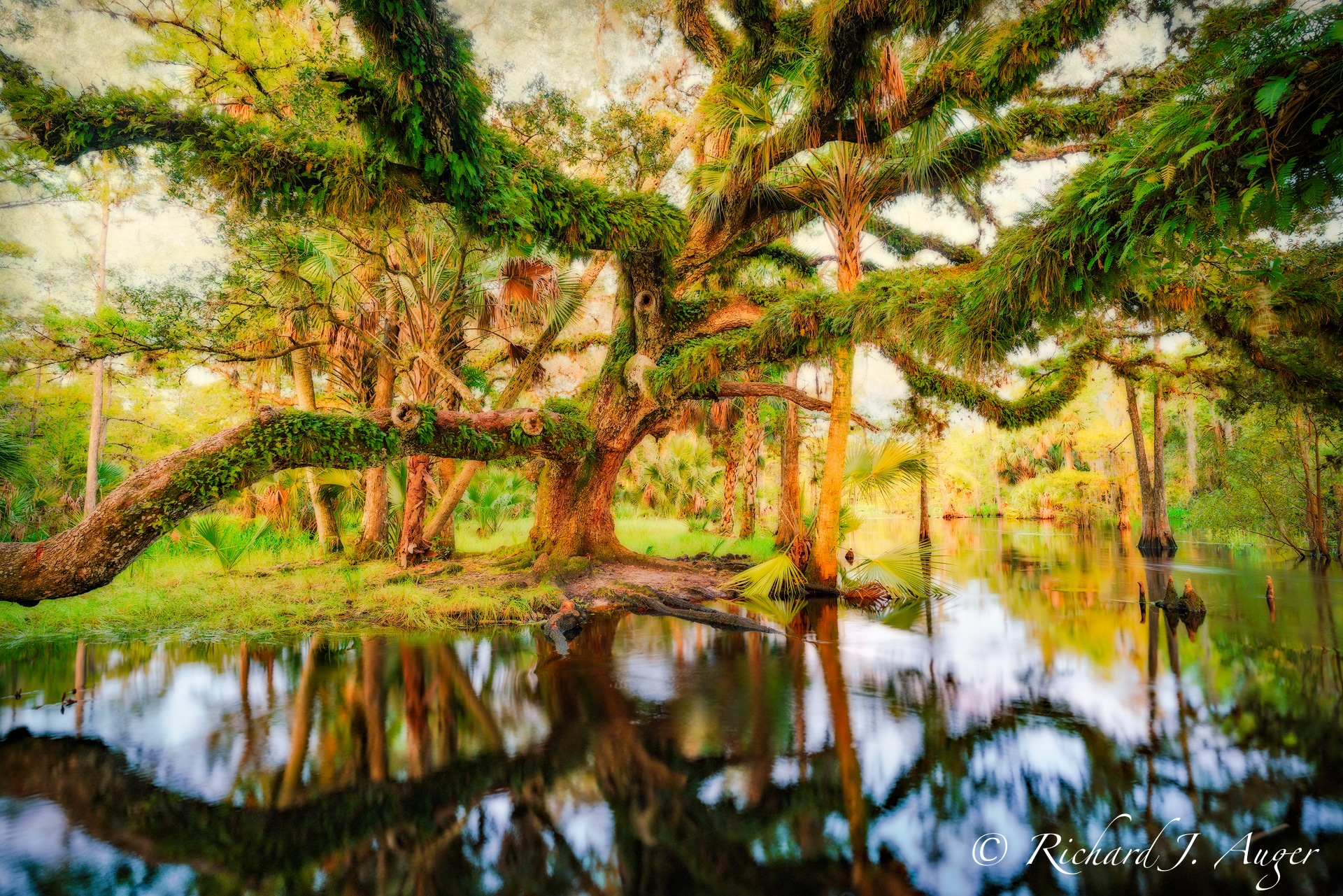 fisheating creek, florida, oak, nature, photography, photo, Richard Auger