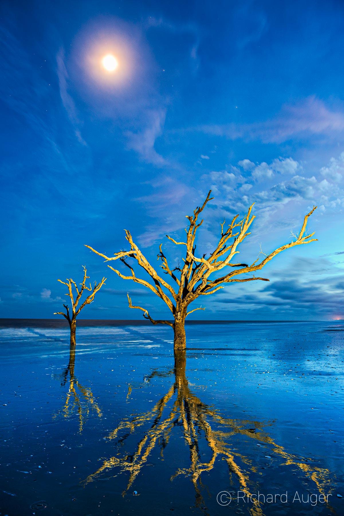 Edisto Island, Botany Bay, South Carolina, Driftwood, Night, Lighting, Reflections, Moon