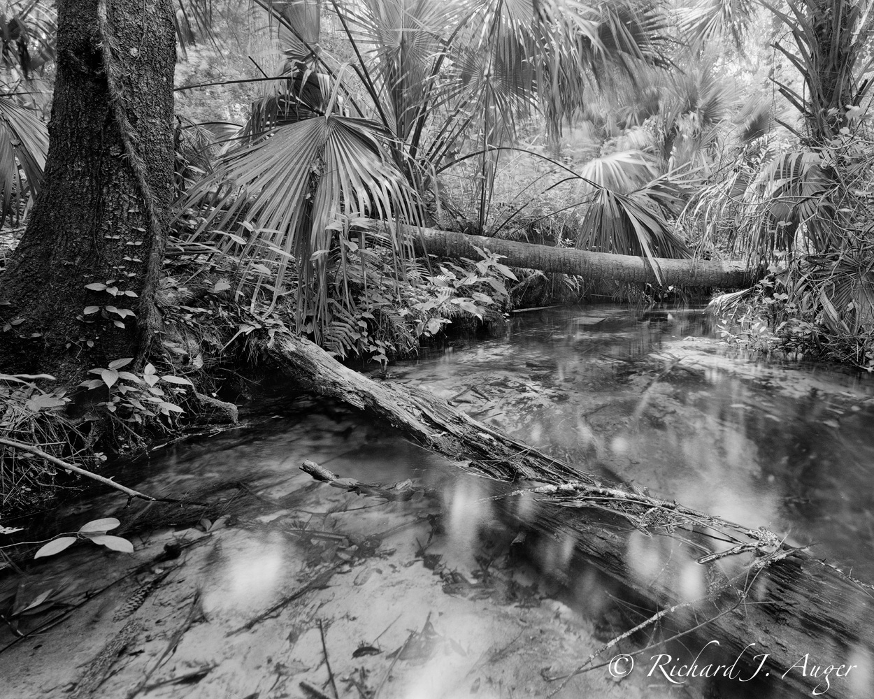 Juniper Springs Run 3, Marion County, Florida