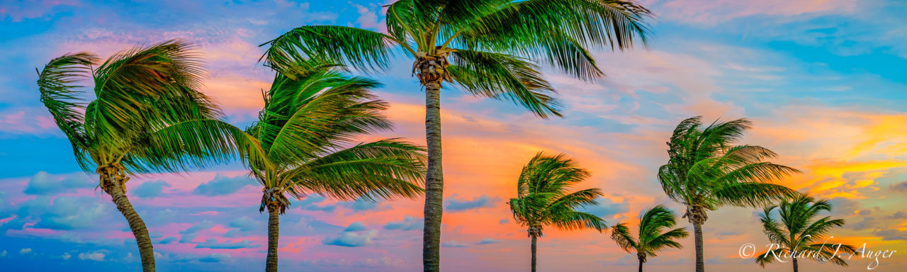 Smather's Beach, Key West, Florida, Palm Trees, Tropical, Sunset
