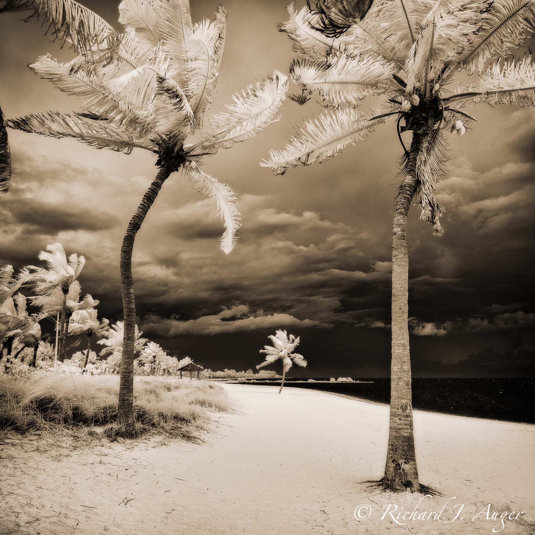 Smathers Beach, Key West, Florida, Palm Trees, stormy, infrared, ocean, landscape, photographer, photography, sepia tone, square