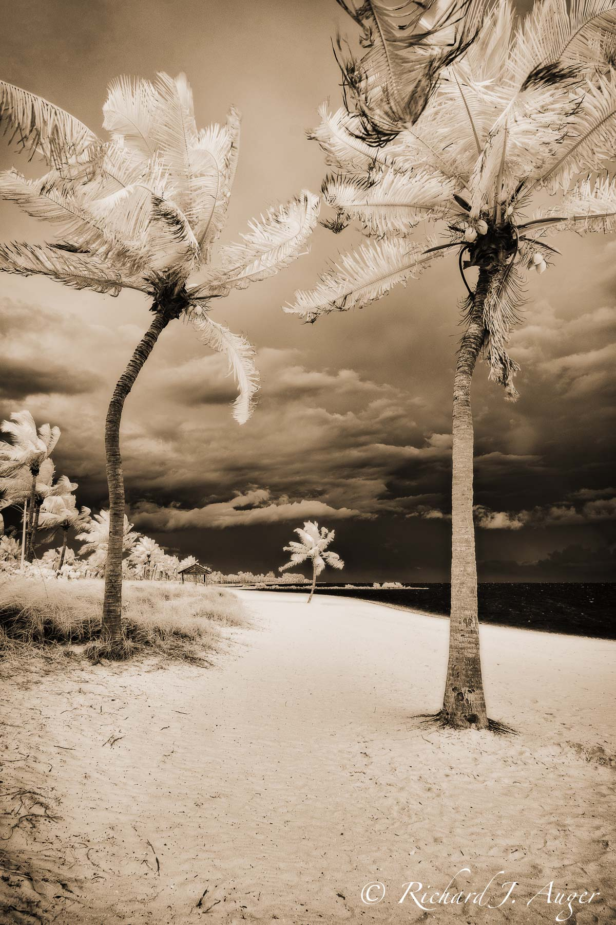 Smathers Beach, Key West, Florida, Palm Trees, stormy, infrared, ocean, landscape, photographer, photography