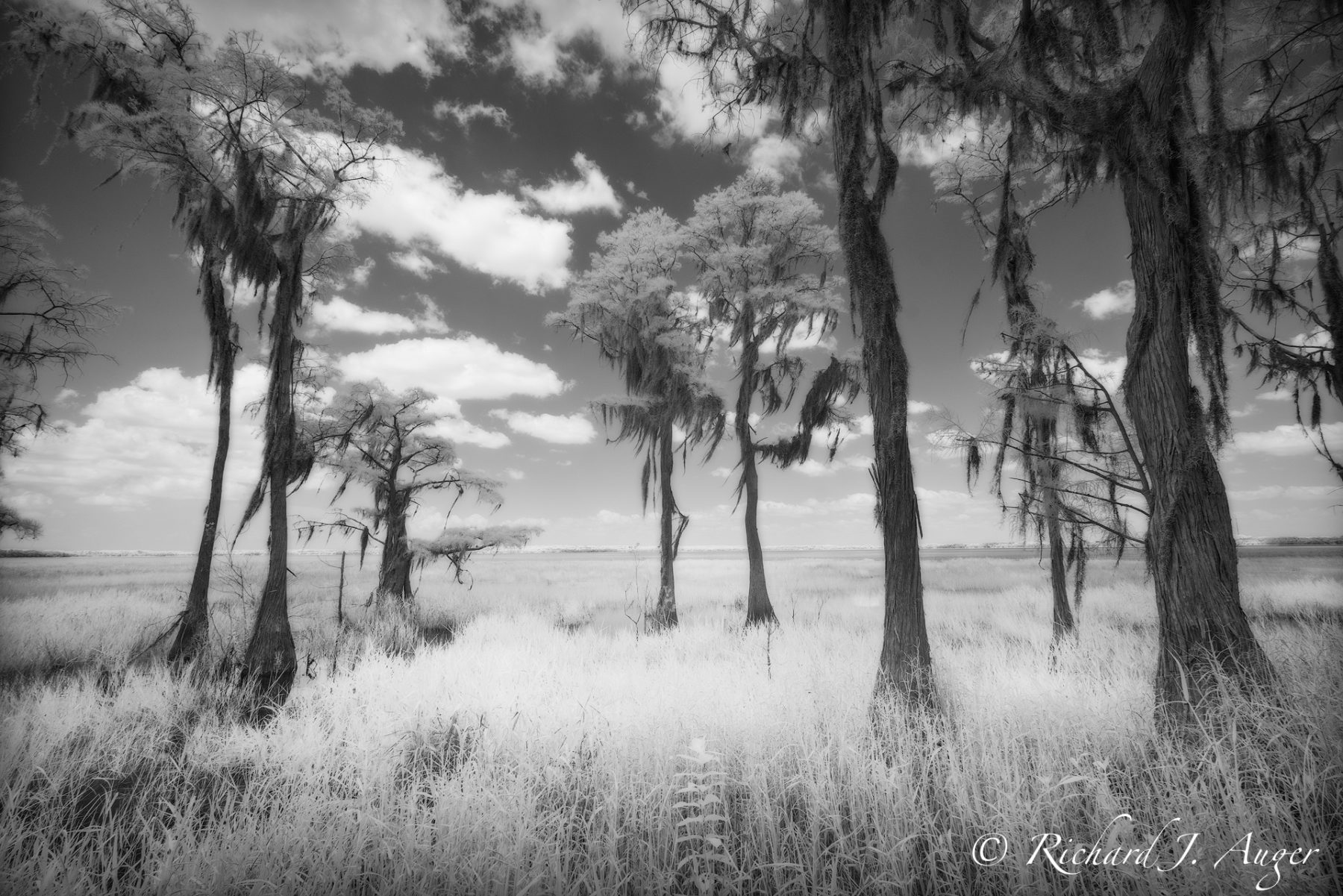Lake Louisa State Park, Florida, black and white, monochrom, photograph, landscape, nature, cypress trees