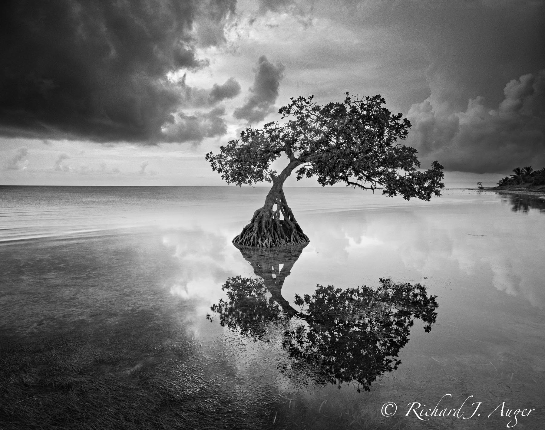 Long Key State Park, Florida Keys, Mangrove, Bay, Ocean, Stillness, Black and White, Stormy