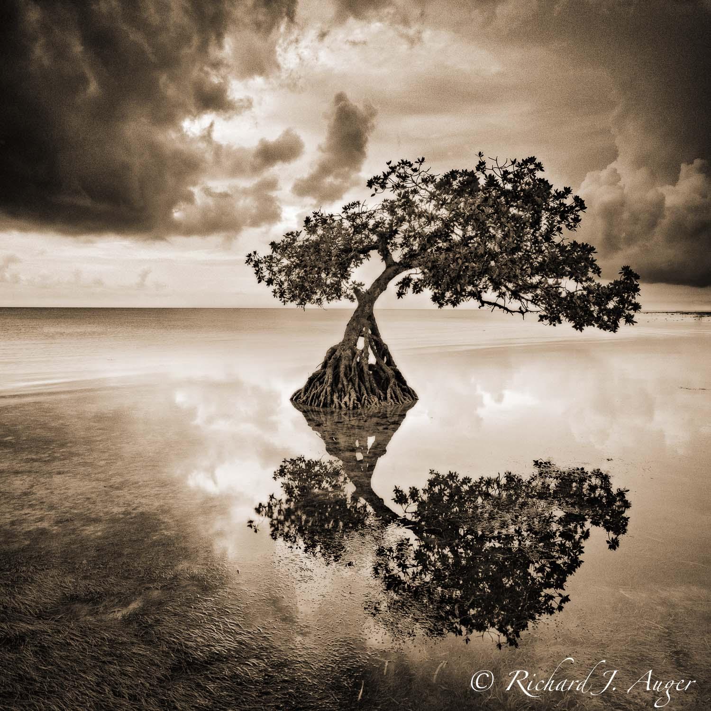 Mangrove, Florida Keys, Storm, Water, Ocean, Landscape, reflections, photograph, sepia tone, monochrome