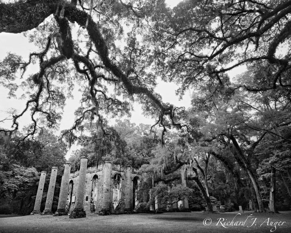 Sheldon Church Ruins, South Carolina, Low Country, black and white, photograph