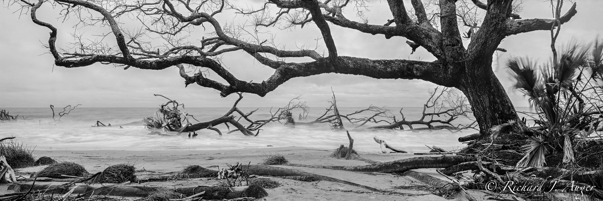 Hunting Island, South Carolina, driftwood, winter, beach, fog, long exposure, photograph, landscape, black and white, panorama