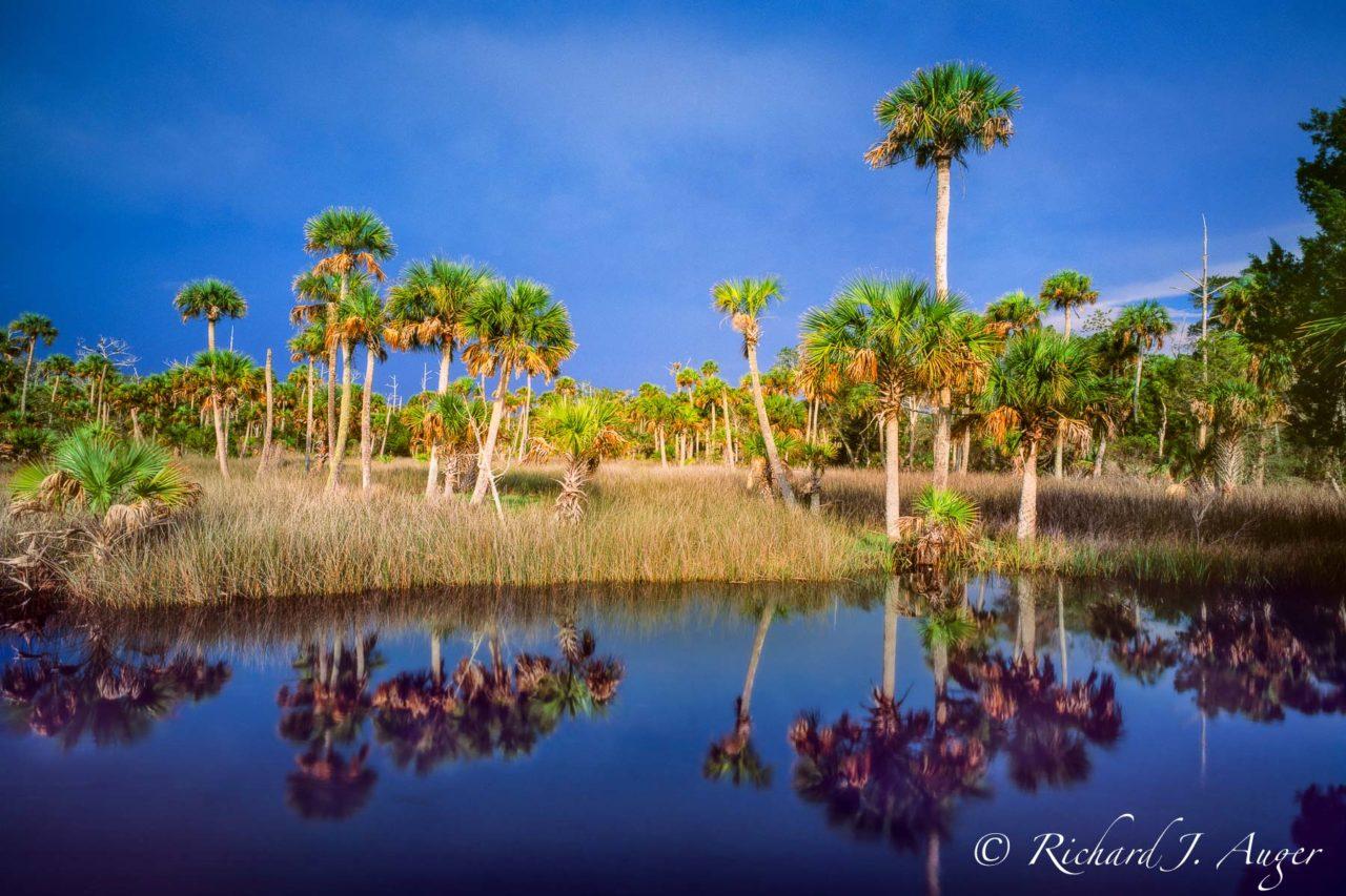 Lower Suwannee National Wildlife Refuge, Florida, water, storm, blue, palm trees, photograph, photographer, landscape