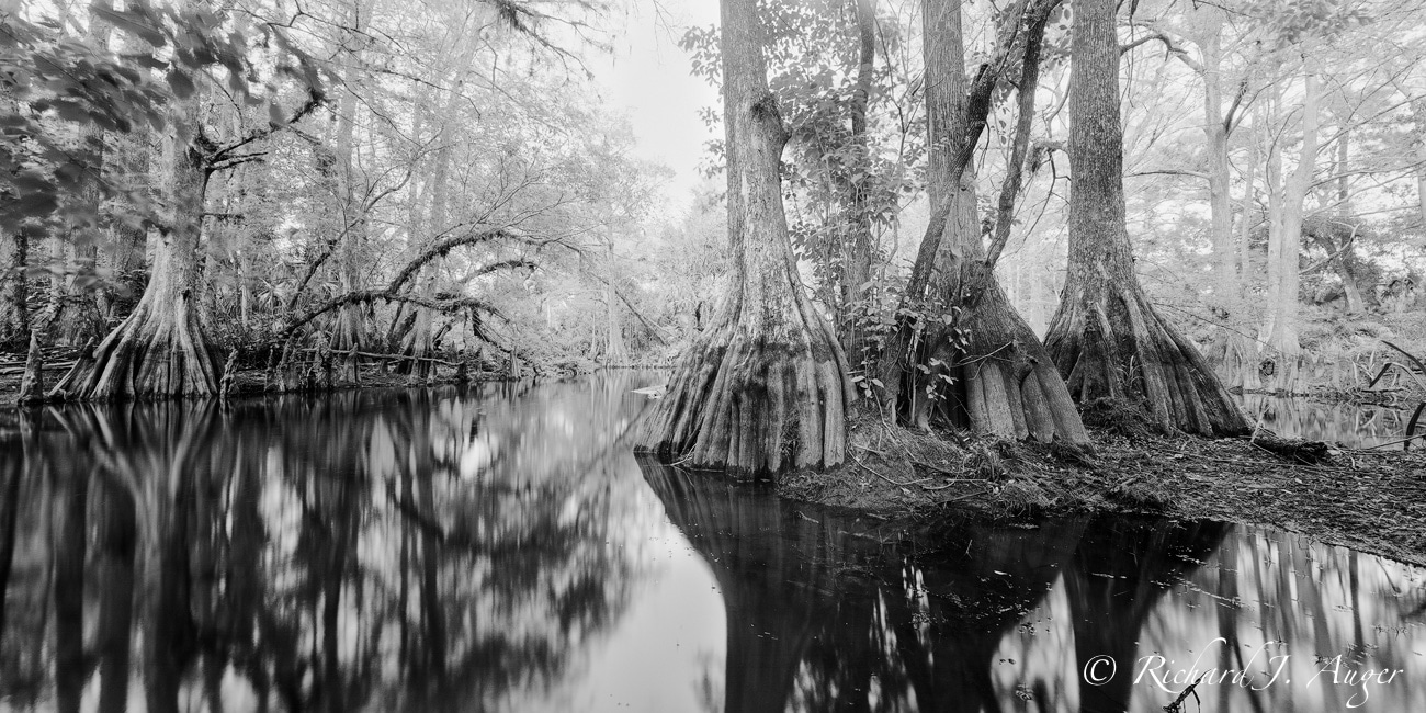 Loxahatchee River 2, Martin County, Florida