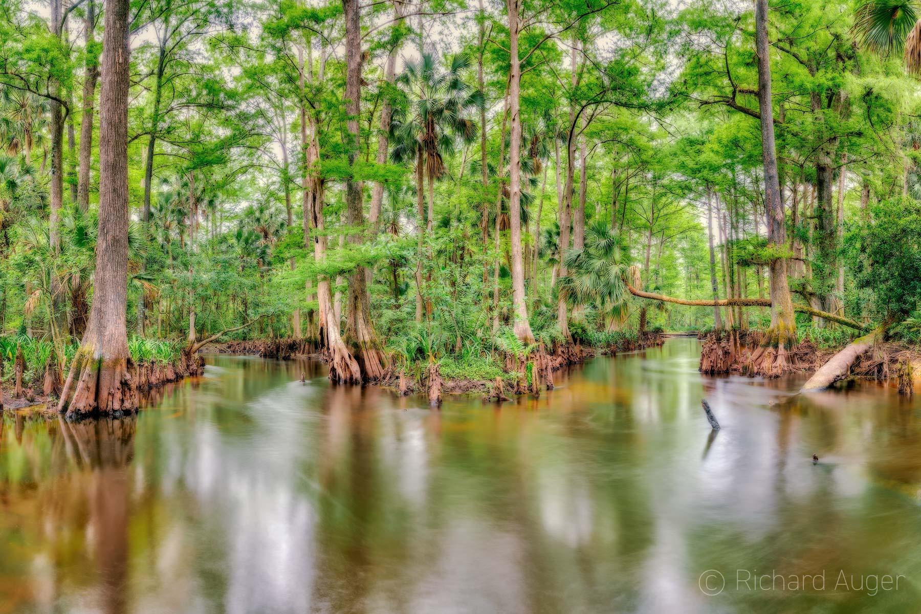 Loxahatchee River, Swamp, Florida, Landscape