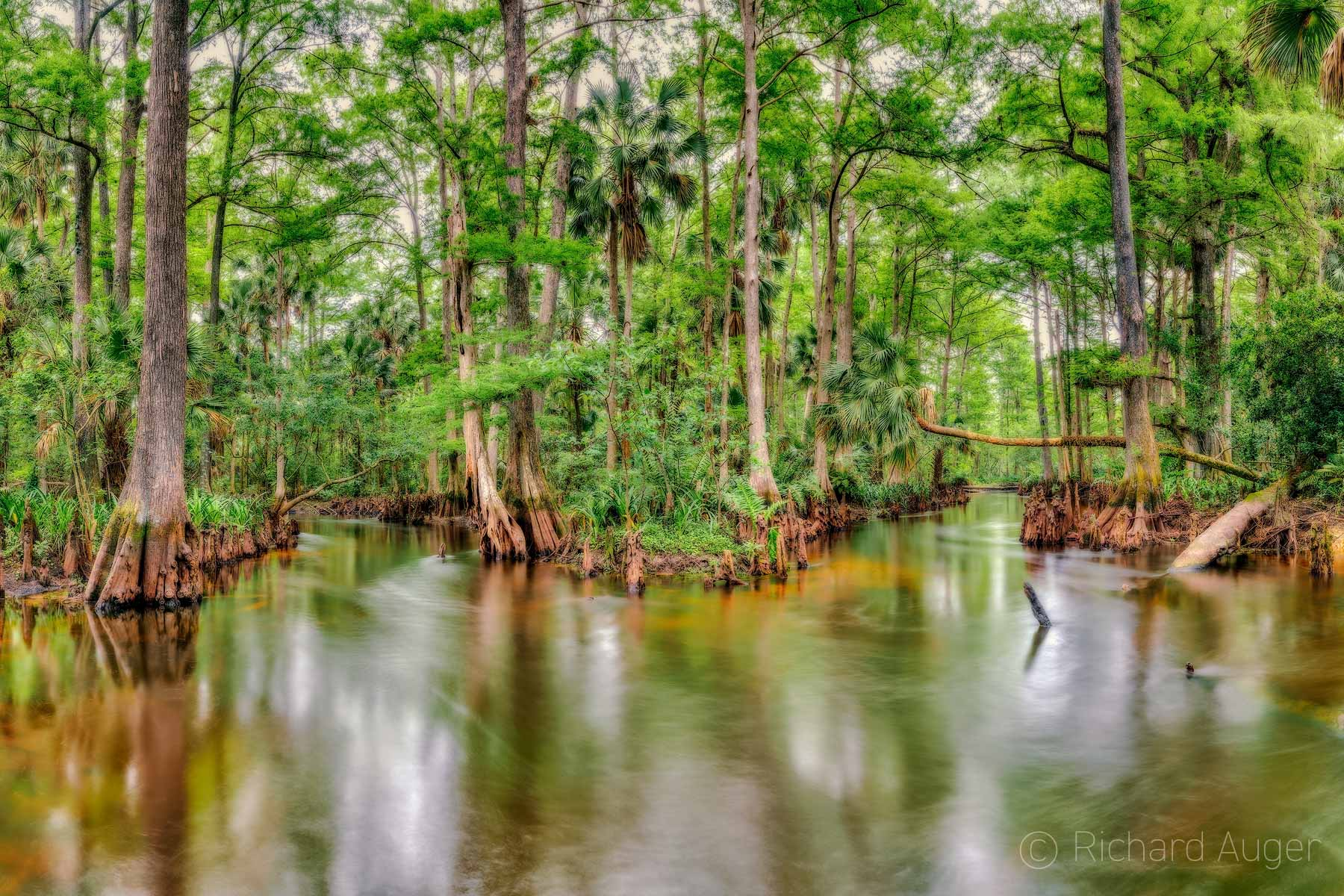 Loxahatchee River, Swamp, Florida, Landscape