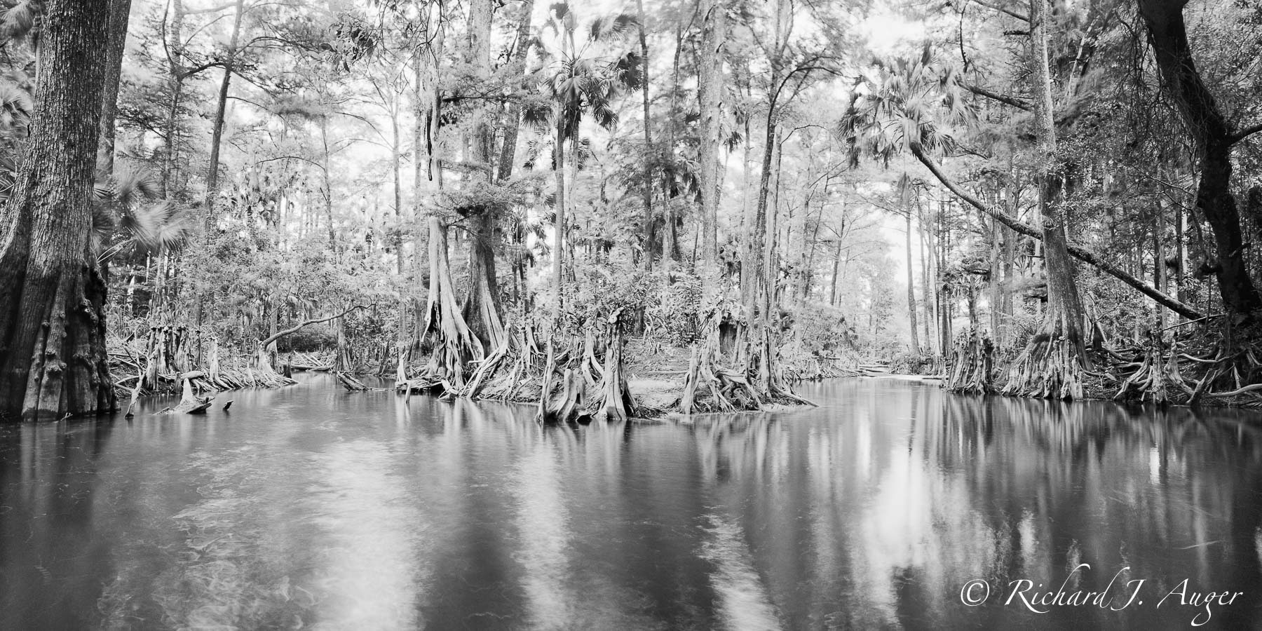 Loxahatchee river, Florida, Swamp, Cypress, Monochrome, Black and White, Photograph, River