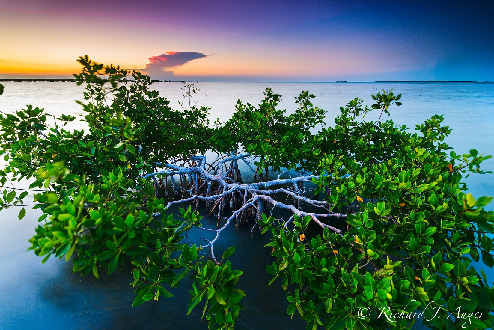 Mangrove, Florida Bay, Florida Keys, Sunset, Nature, Ocean, Calm