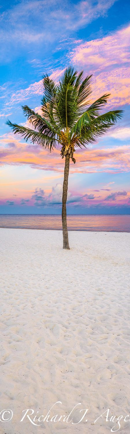 Palm Tree, Vertical Panorama, Key West, Smathers Beach, Sunset, Sand, Beach, Ocean, Pastels, Pink, Canvas Wrap, Metal Print, Photograph