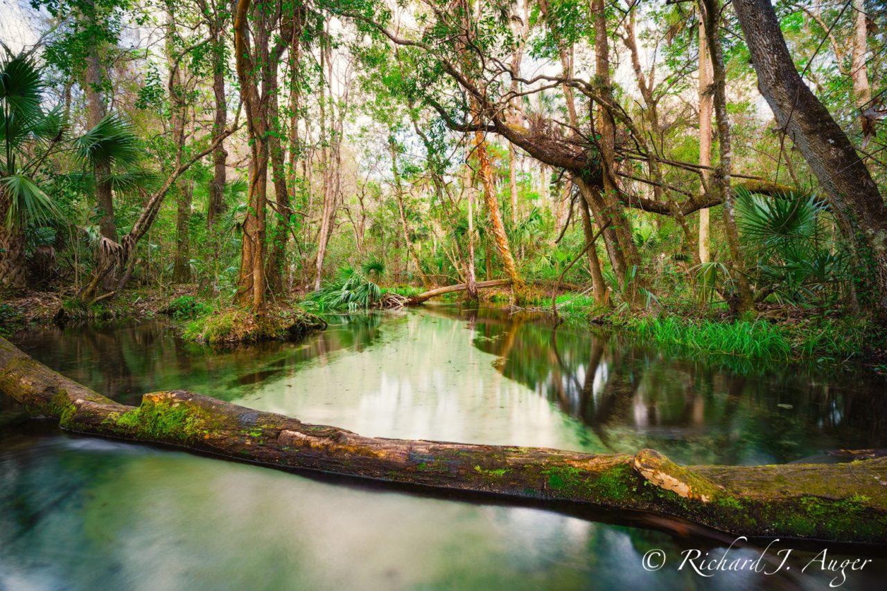 Rainbow River, Dunnellon, Florida, Wild, Creek, River, Swamp, nature