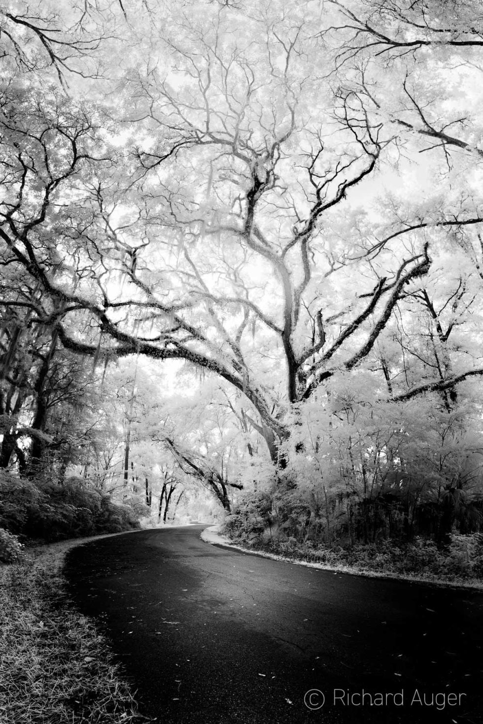 Rainbow Springs State Park, Florida, Road, Forest, Entrance, Trees, Monochrome, Nature