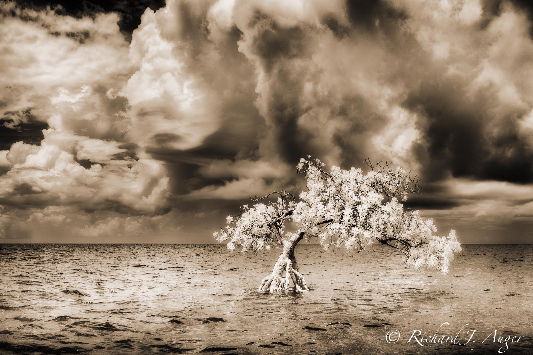 Long Mangrove State Park, Florida, Storm, Moody, Sepia, Monochrome, light, photograph, photographer, water, landscape