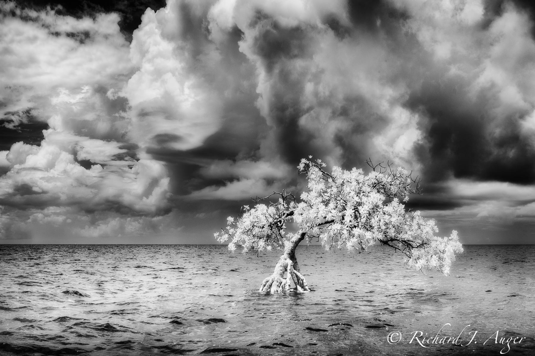 Long Key State Park, Florida Keys, Mangrove, Ocean, Stormy, Photograph, Photography, Landscape, Black and White, Infrared